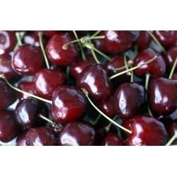 Trái Cherry tươi  | Thực phẩm chức năng